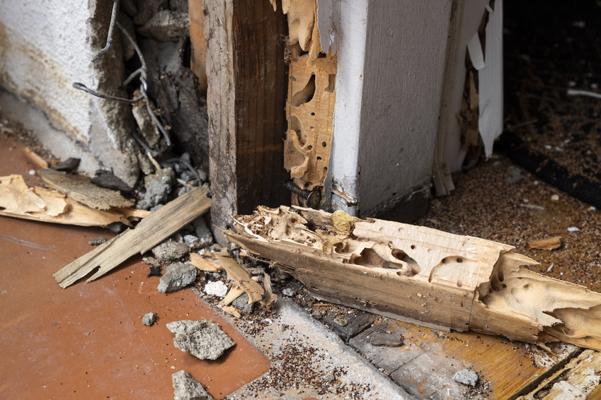 vice caché : termites et fissures